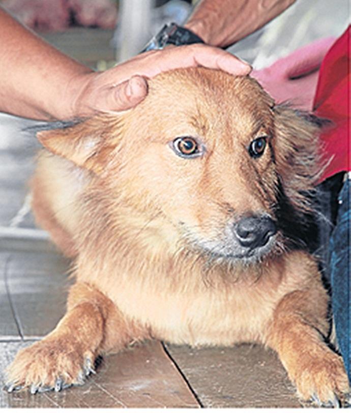 В Таиланде собака спасла выброшенного на свалку младенца
