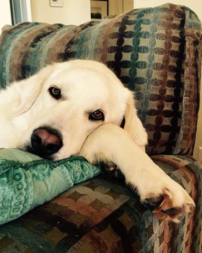Ветеринар хотел угостить собачку лакомством за хорошее поведение, но питомица оказалась своенравной