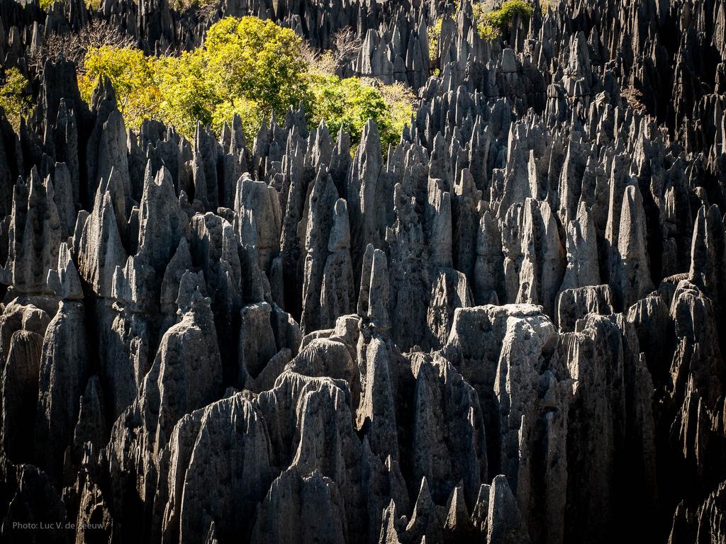 7882085940 cf36b6dc81 b Каменный лес на Мадагаскаре