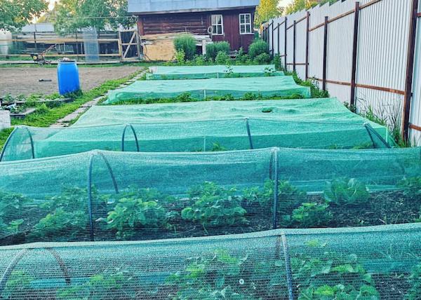 Про сетки в огороде