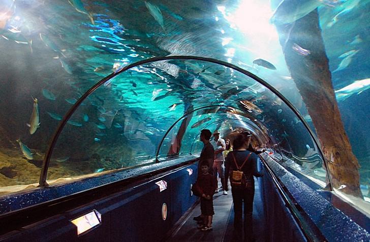 Подводный мир Келли Тарлтона