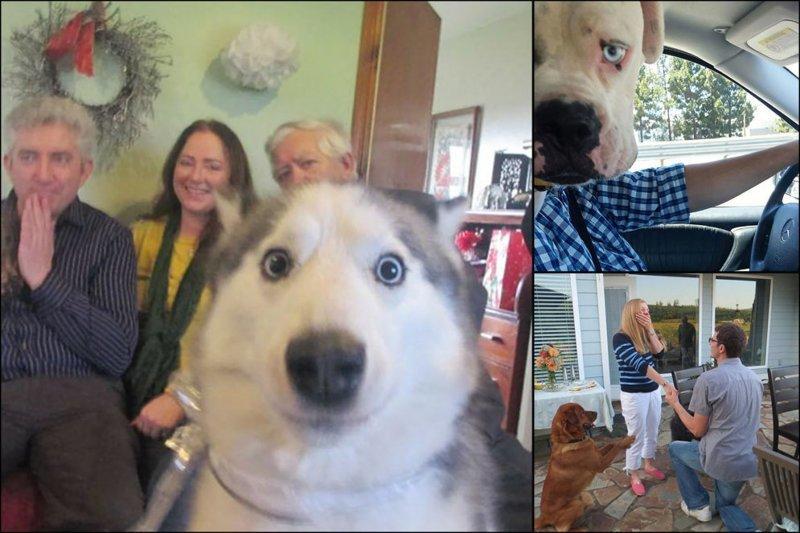"""""""Я твой фото хвостом шатал"""". 18 кадров, испорченных наглыми собаками"""