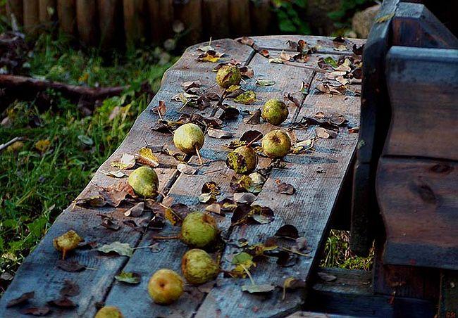 Старые брошенные сады без вредителей