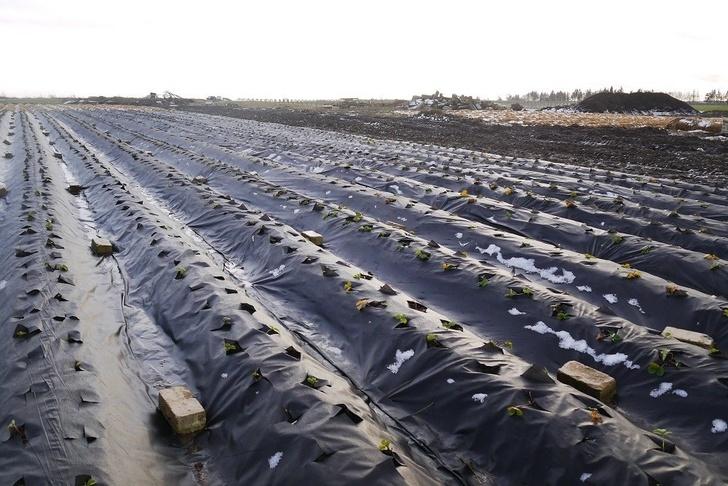 В Калининградской области создается первый плодово-ягодный питомник
