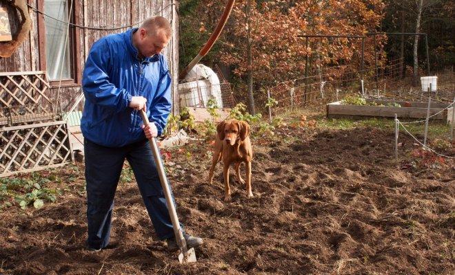 Подготовка огорода к зиме – …