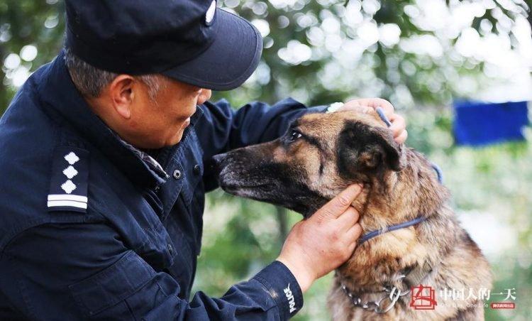 Достойная старость служебных собак: китайский кинолог открыл приют для собак-пенсионеров