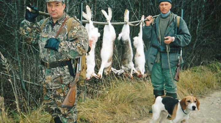 Котловая охота на зайца