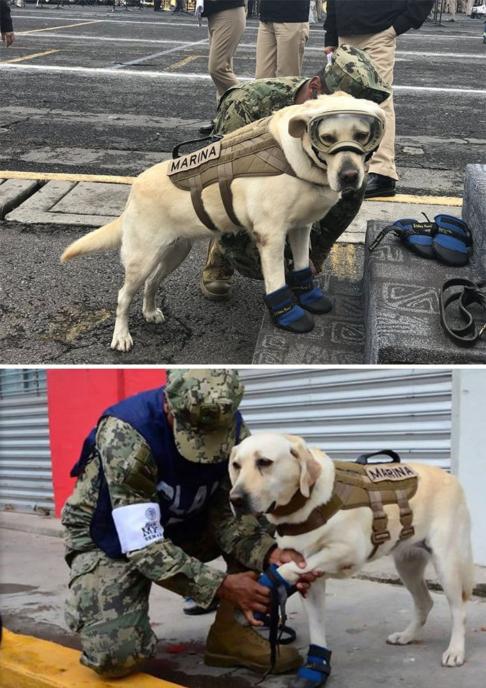 This Is Frida - The Good Girl Who Saved 52 People From Mexico
