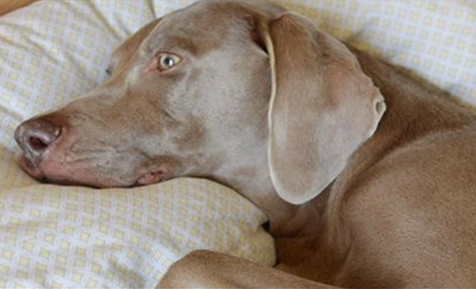 После смерти друга пес отказ…