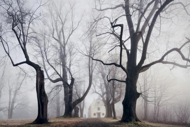 Призрачные лесные пейзажи от фотографа, который не различает цвета