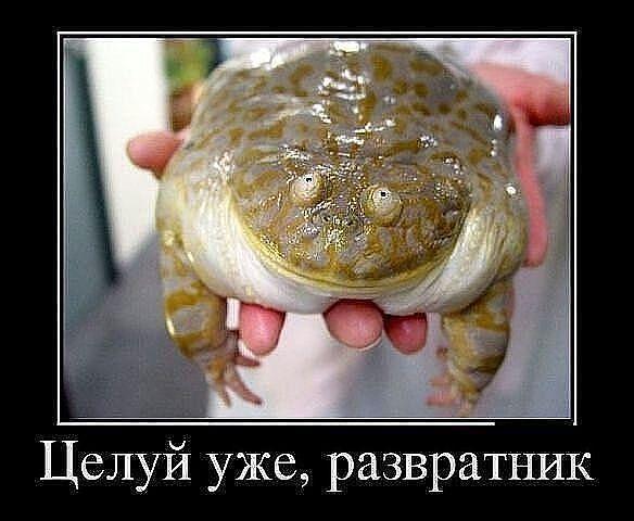http://mtdata.ru/u18/photo41A8/20708523690-0/original.jpg#20708523690
