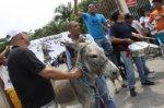 Эквадорцы хотели поставить на должность осла.