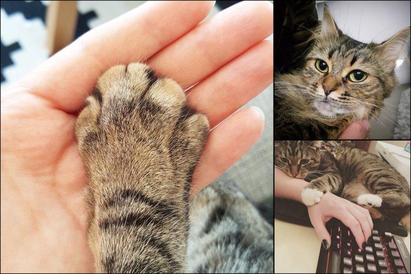 20 диких вещей, которые все тайно делают со своим котиком