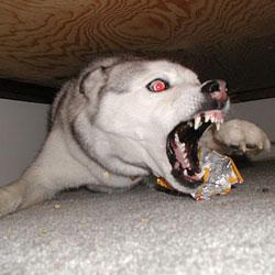 Самые злобные собаки