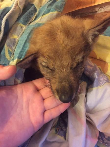 Мурманчане нашли маленького истощённого щенка и решили помочь ему...