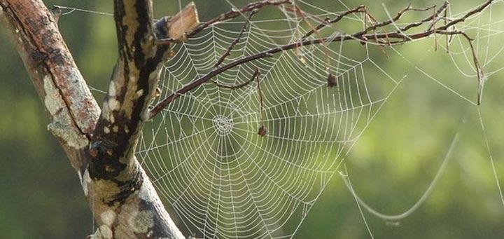 Сверхэластичный и прочный материал: ученые создали аналог паутины, на 98% состоящий из воды