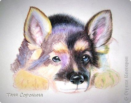 Картина панно рисунок Рисование и живопись Тренируюсь на щенках  Пастель фото 4