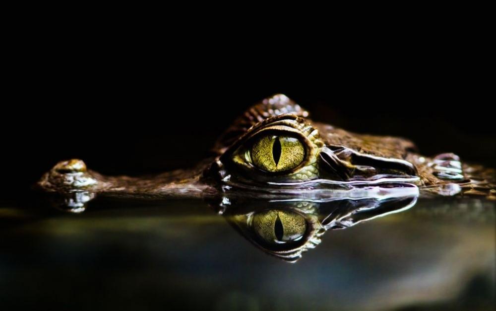 natgeo31 Topo Fotografias National Geographic setembro