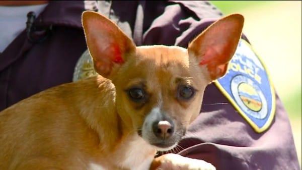 «Денег нет на эвтаназию!»: жестокосердная девушка попыталась убить собаку, но животное вовремя спасли!