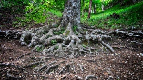 ТОП-10: Способности растений, о которых вы не знали