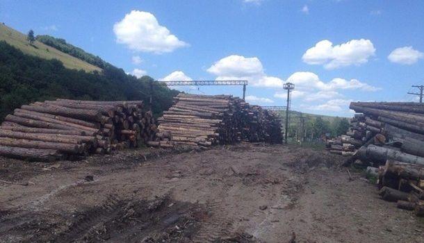 Прощай, карпатские леса: Верховная Рада разрешила вывозить дрова
