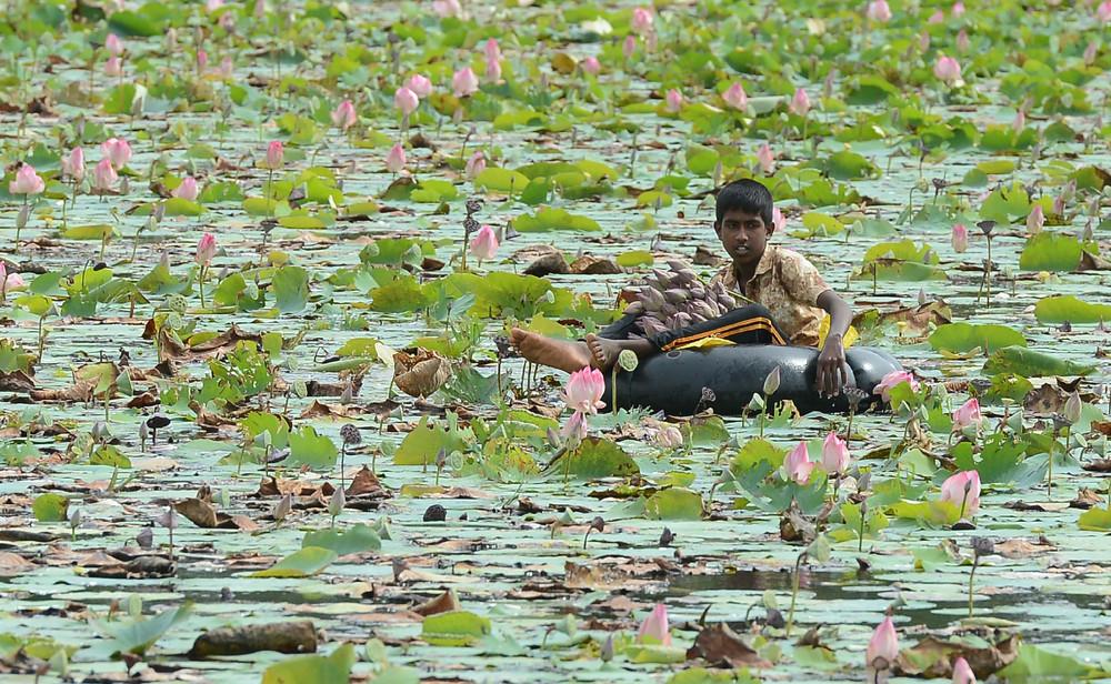 Фотопрогулка по экзотической и удивительной Шри-Ланке