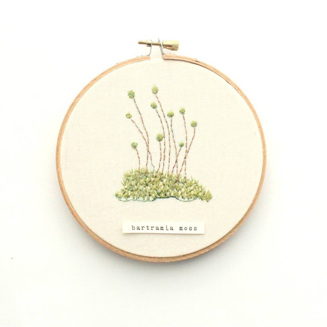 Ботаническая вышивка от художницы из Колорадо: Instagram недели