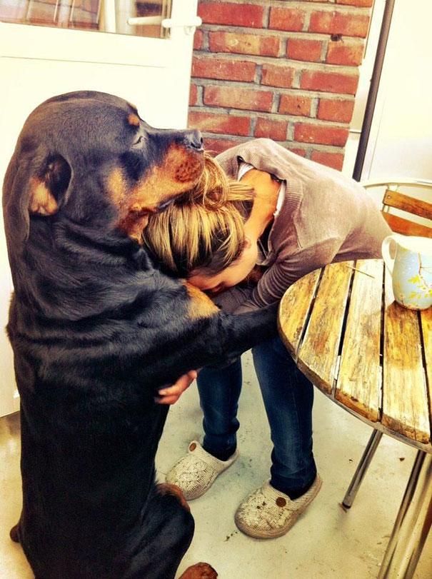 Собаки, обнимающие людей