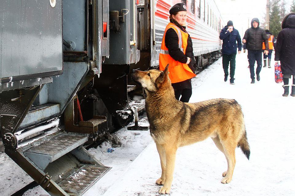 Дворняга притворилась Хатико, чтобы клянчить еду у пассажиров поезда