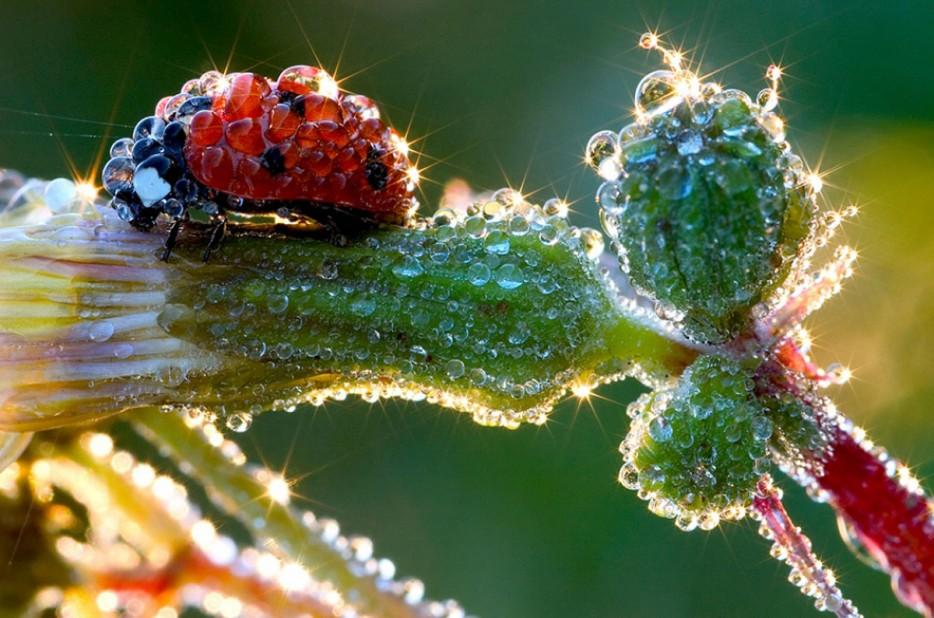 35 потрясающих  снимков насекомых<span>Даже не верится, что они живут среди нас</span>