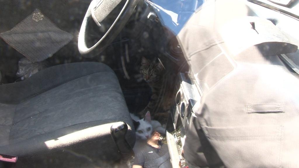 Двух голодных малышей заперли в машине на неделю... Спасение котят
