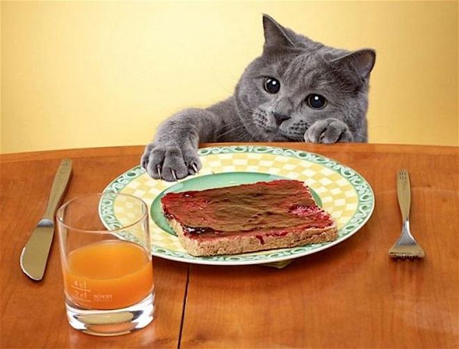 «Этот неловкий момент»: 10 животных, которых застали за воровством еды