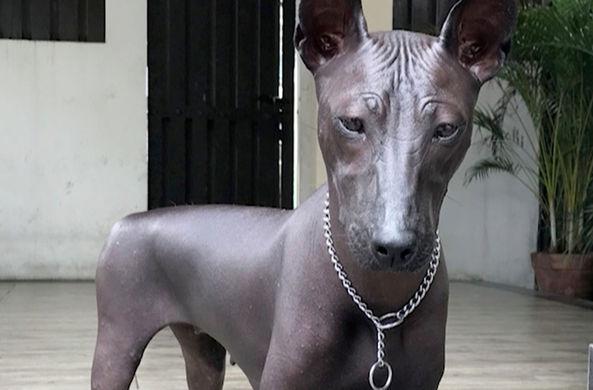 Фото собаки, похожей на статую, озадачило Сеть