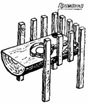 Новый способ установки капканов на песца