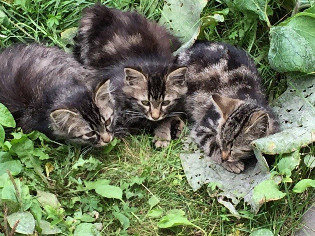 Скоро заморозки и котята на улице продержатся недолго