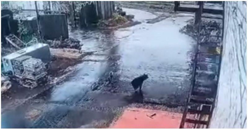 Работнику локомотивного депо удалось сбежать от медведя