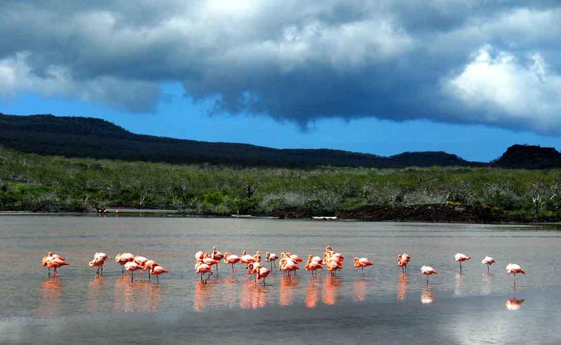 Флореана Эквадор Флореана является частью большого массива Галапагосских островов. Этот маленький участок суши находится в ста километрах от Эквадора. Население Флореана всего сто человек, тут есть один телефон и один отель, который видит одного постояльца раз в год.