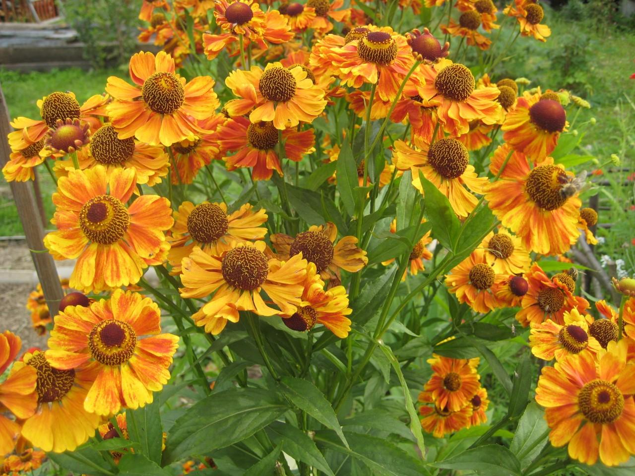 Цветы нам дарят вдохновенье
