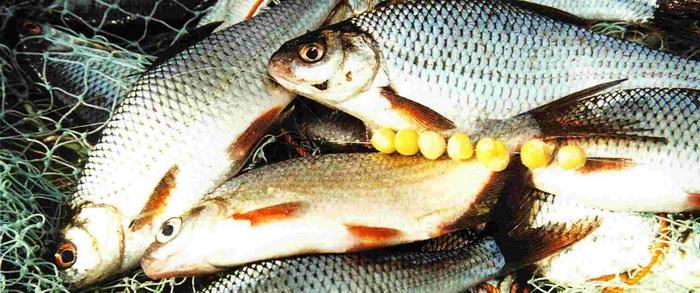 ловля рыбы на покаток летом