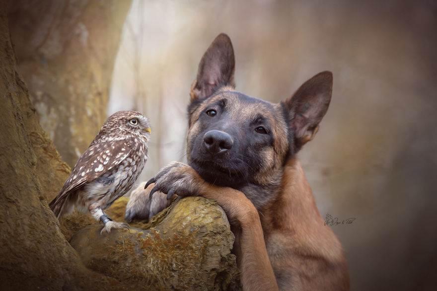 Эти 30+ фотографий пса и его подруги совы — единственная вещь, которую вам нужно увидеть сегодня