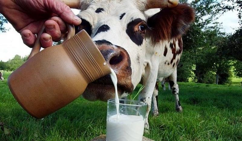 Почувствуйте разницу: сколько можно купить мяса и молока на польскую и белорусскую «минималку»