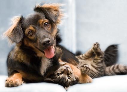 КОШКИН ДОМ. Непридуманные истории. Как пёс Дик спас кота Саню
