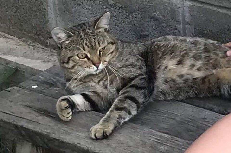 «Ребята, Тишка пришел!»: кот, пропавший 7 лет назад, нашел дорогу домой