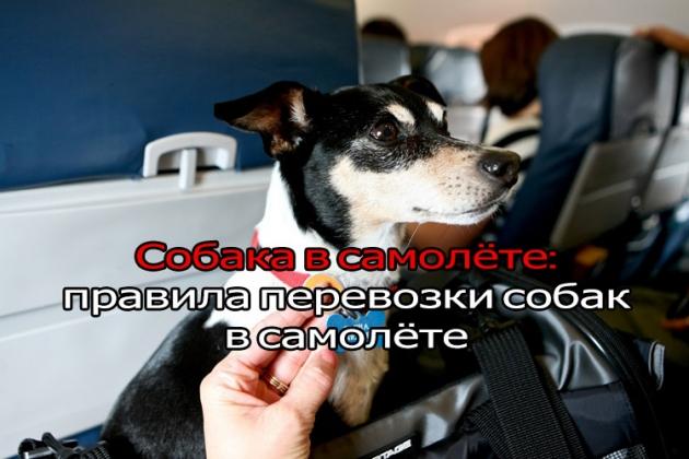 Как перевозить собаку в самолете!