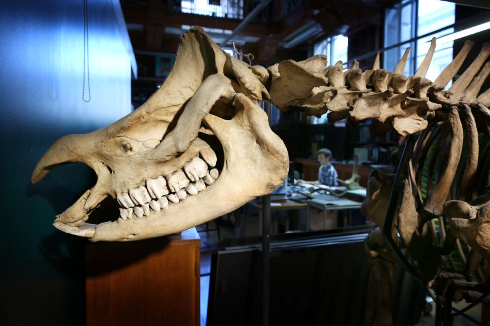 gmoz29 Лондонский музей зоологии и сравнительной анатомии Гранта