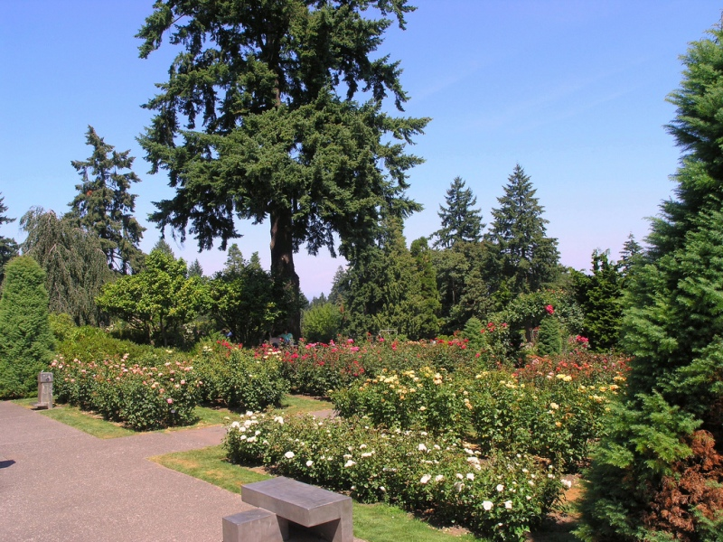 Знаменитый International Rose Test Garden в Портленде