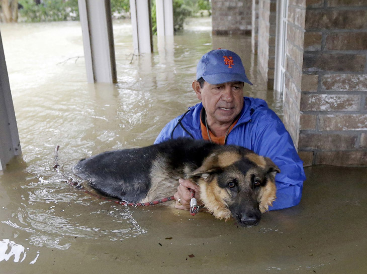 Как люди спасают самое свое ценное — собак и кошек от урагана «Харви»