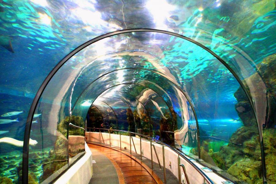 Самый большой аквариум Барселоны.