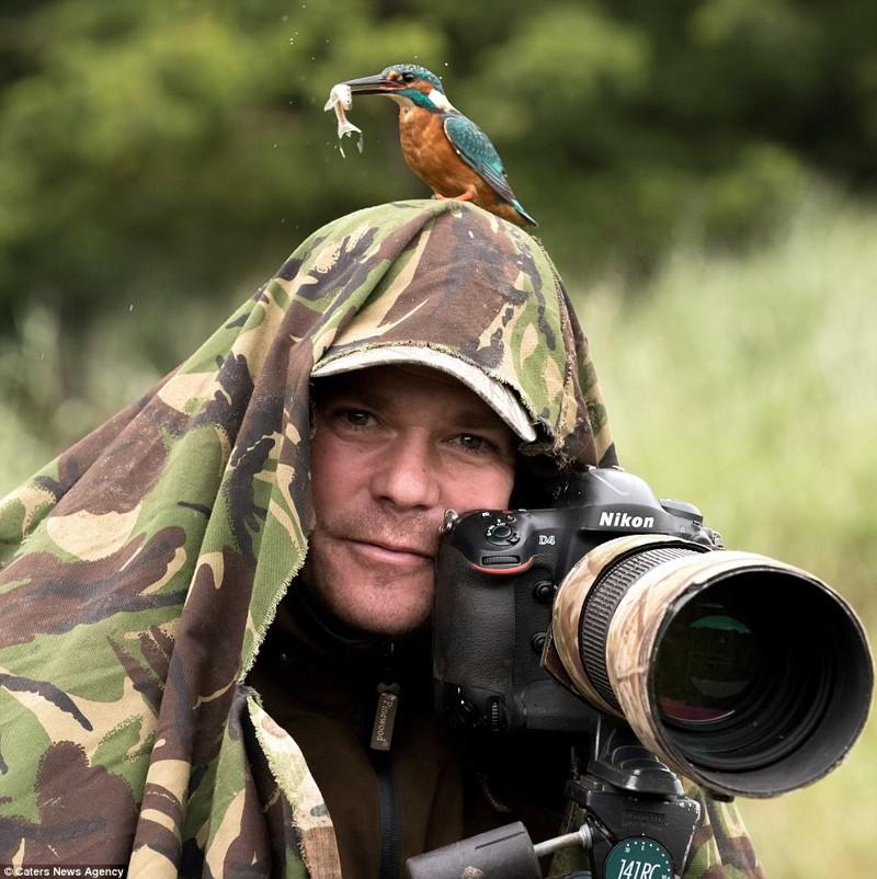 Уникальный кадр дикой природы: бесстрашный зимородок позирует с добычей на голове фотографа