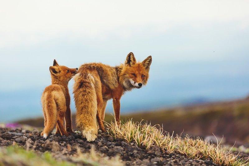 Чем таинственна и ценна для науки природа Камчатки (8 фото)